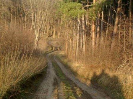 Такие манящие дороги