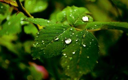После дождя (1280х800)