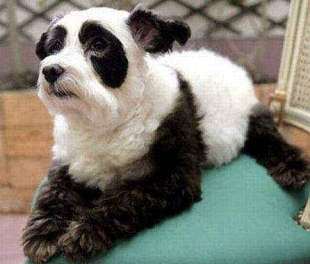 Тюнинг собак