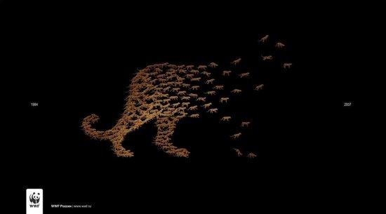 Подборка рекламы от WWF
