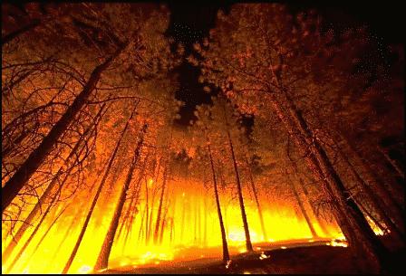 Как спастись и защитить свой дом от лесного пожара