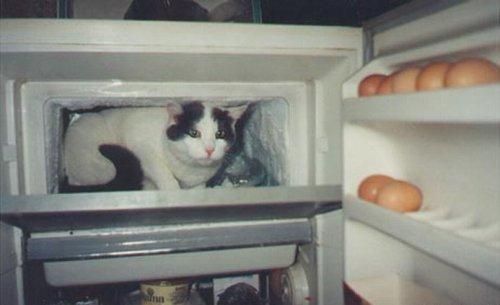 Котэ и холодильник