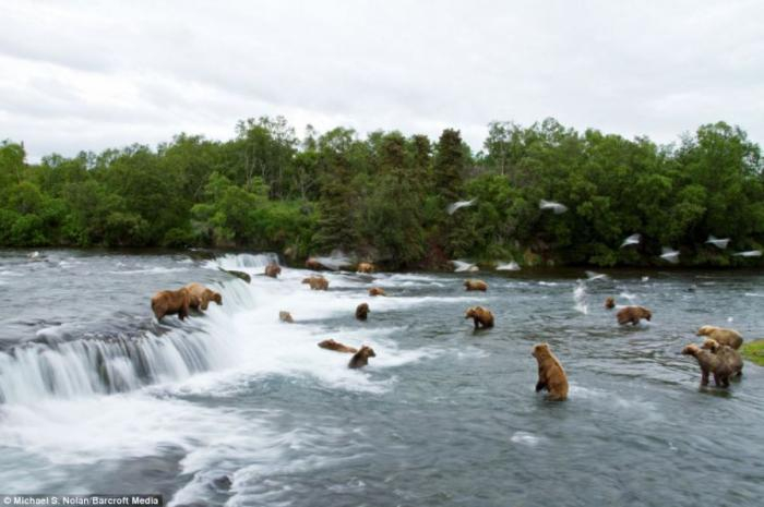 Медведи гамми секс
