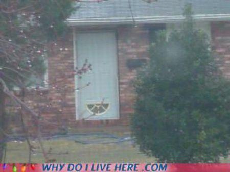 Странные соседи