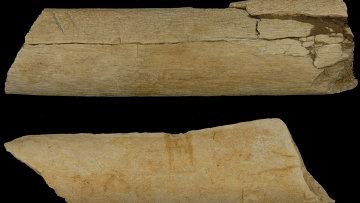 Предки человека пользовались орудиями труда 3,4 млн лет назад