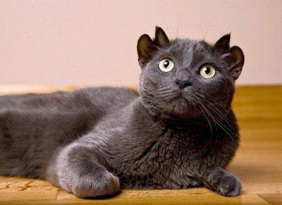 Необычные котята