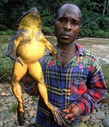 Штраф за поцелуи с жабой