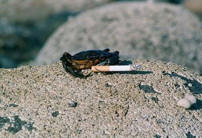 Крабы курят