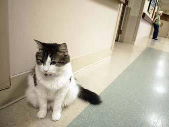 О предсказывающем смерть коте снимут фильм