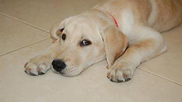 Приз за самый неожиданный страховой случай в США получила собака