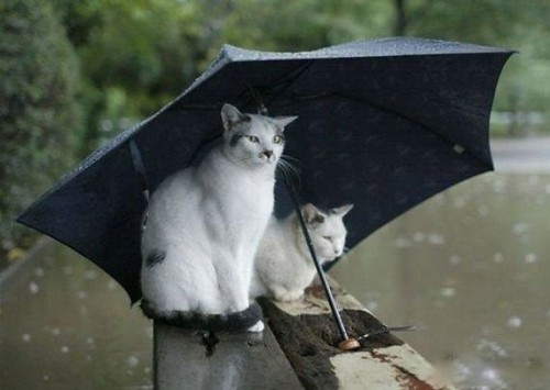 Выходные будут дождливыми