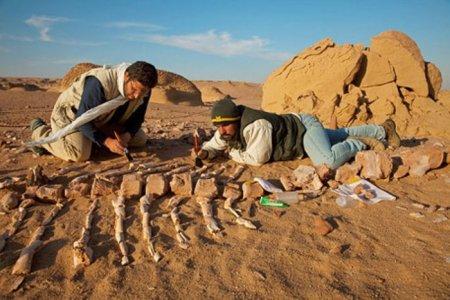 Киты в пустыне