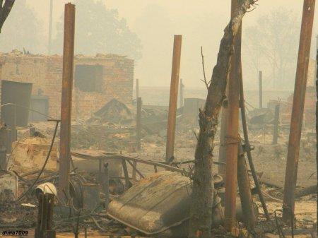 Последствия лесного пожара