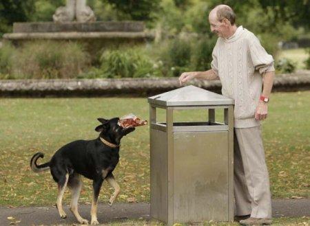 Собака, которая убирает мусор
