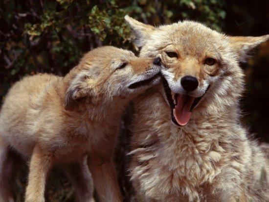 Таинственный мир животных
