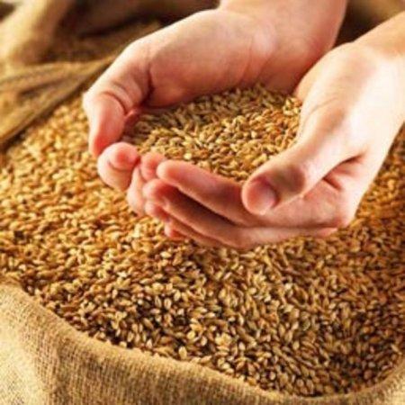 Беларусь вряд ли сделает скидку на зерно для России