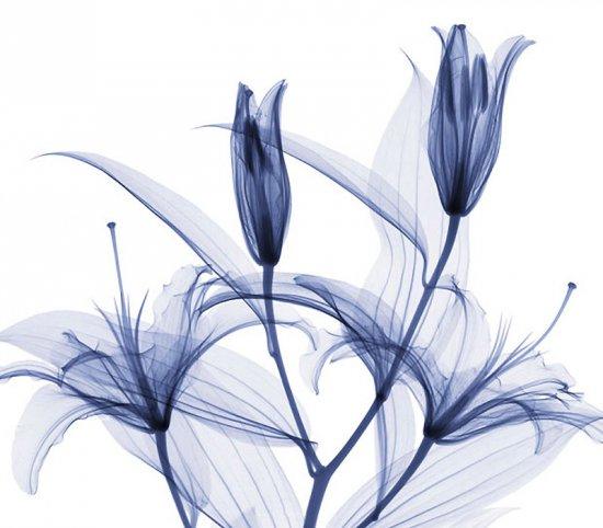 Цветы в рентгеновских лучах