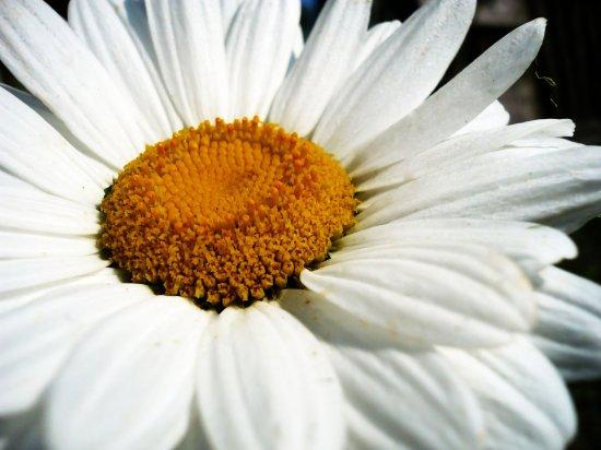Немного летней красоты [by me]