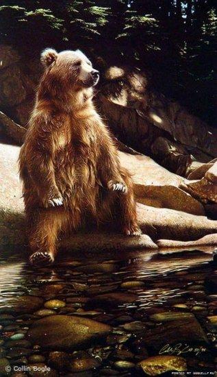 Рисунки Коллина Богла