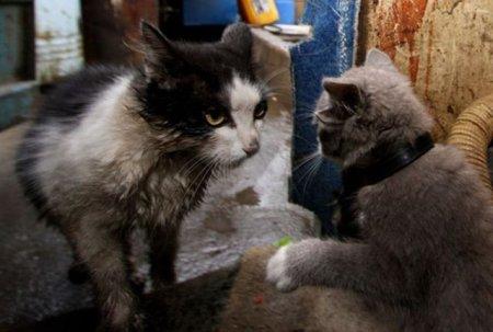 Адский котенок