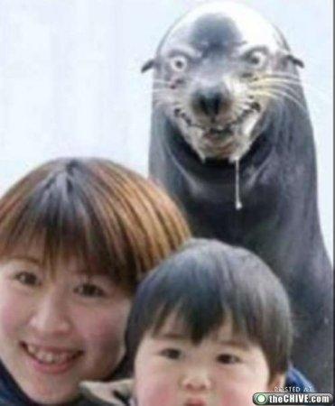 Смешные зверьки