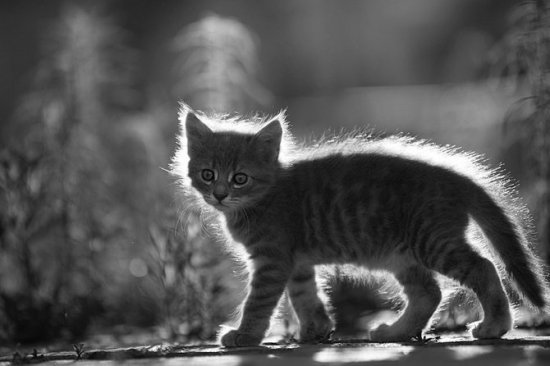 Фотограф Serhat Demiroglu
