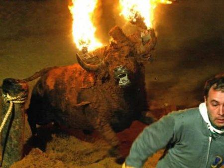 Адский бык