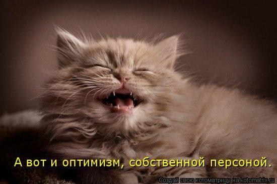 Котоматрицы-36