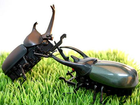 Эти удивительные жуки