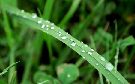 После дождя 2 (большой формат)