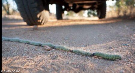 Паравоз из гусениц
