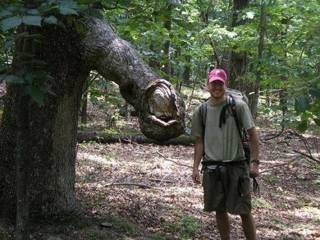 Пошлые деревья