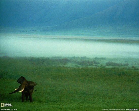Лучшие обои 2009 от National Geographic