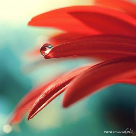Макро фотографии... Фотограф Ibrahim M. Al Sayed