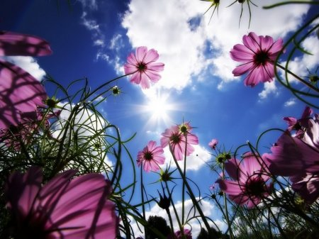 Красота далеко от нас