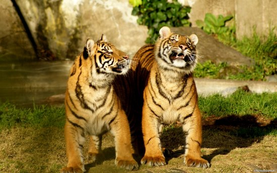 Animals WideScreen Wallpapers