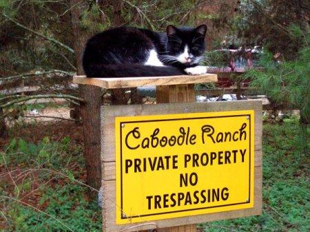 Деревня бездомных кошек