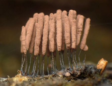 Красивые грибы
