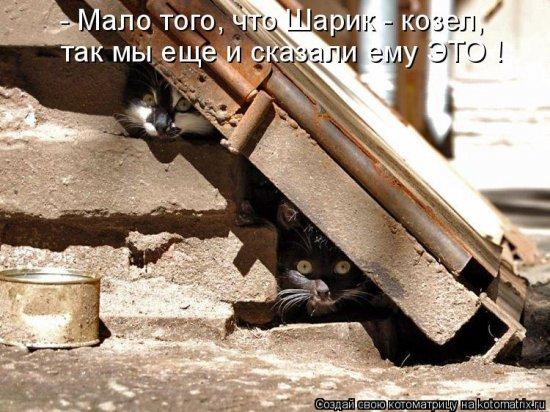 Котоматрицы-37