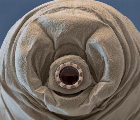 Тихоходки – одни из самых удивительных существ на Земле