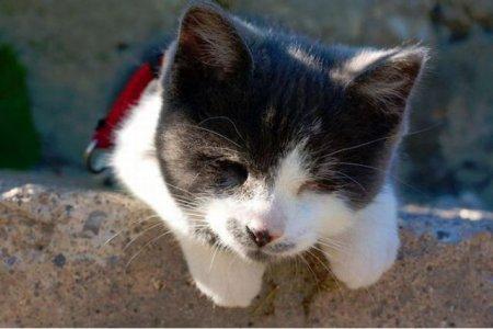 Слепой котенок