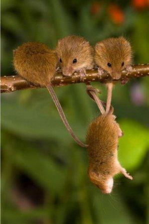 Тайная жизнь полевых мышек