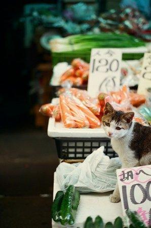 Японские кошки