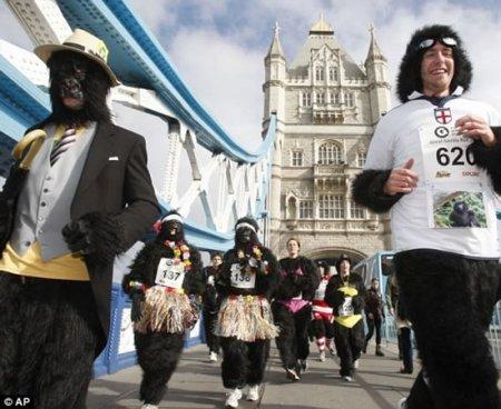 Забег горилл в Лондоне