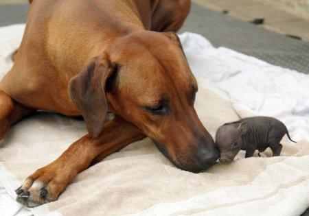 Животные усыновления