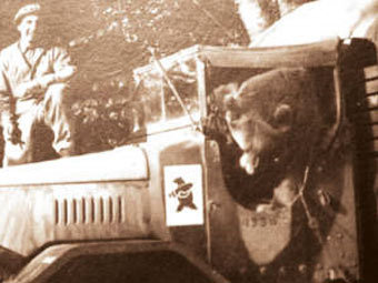 Сражавшемуся с нацистами медведю поставят памятник