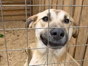 Защитники бездомных животных просят Бамбизу помочь с гуманной эвтаназией