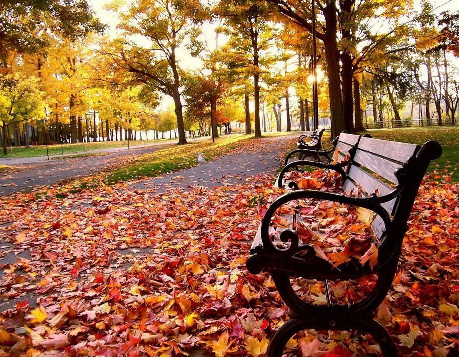 Лавочка дерево листья осень бесплатно