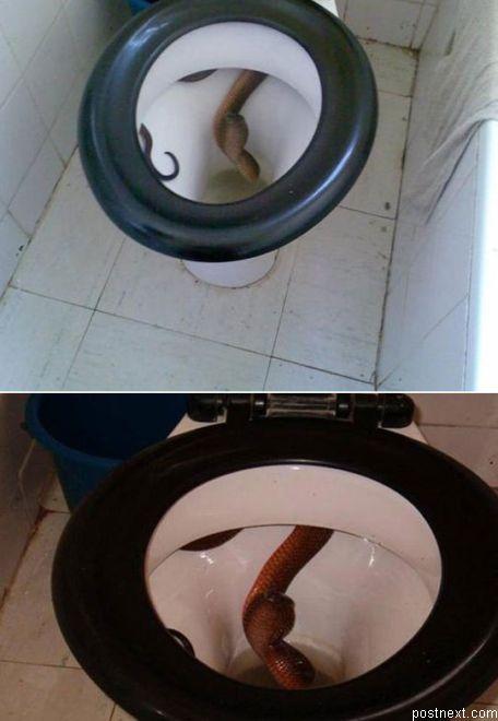 Я бы обделался еще на входе в туалет