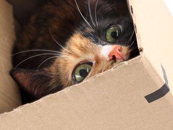 Команду саперов вызвали на обезвреживание коробки с котятами